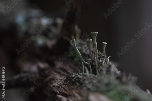 Macrophotography. Moss and lichen. Canvas Print