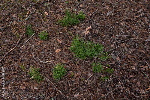 Macrophotography. Moss and lichen. Wallpaper Mural