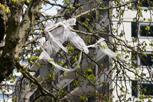 White Packaging Plastic Ribbon Discarded And Entangled In The Branches Of A Chestnut Tree With Fresh Green Crops In Spring.