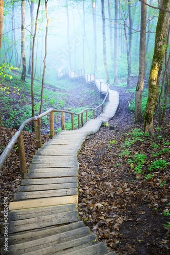 A wooden stairway through the hills of a misty mixed coniferous forest. Ancient mossy tree trunks close-up. Early morning fog, pure sunlight through the trees. Gauja national park, Sigulda, Latvia;