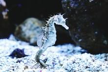 Close-up Of Sea Horse In Aquarium