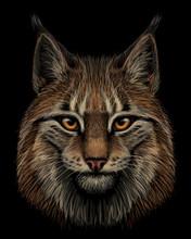Lynx. Realistic, Hand-drawn, C...