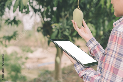 Asian women farmer stands in a mango grove and works through a tablet computer Canvas Print