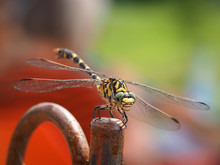 Close-up Of Dragonfly On Rusty Iron