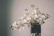 Orchid Flowers In The Vase