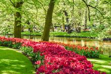 Parque Floral De Keukenhof (Lisse, Holanda Meridional, Países Bajos) / Bloemenpark Keukenhof (Lisse, Zuid-Holland, Nederland) Lago Con Flores Y árboles Reflejados En El Agua