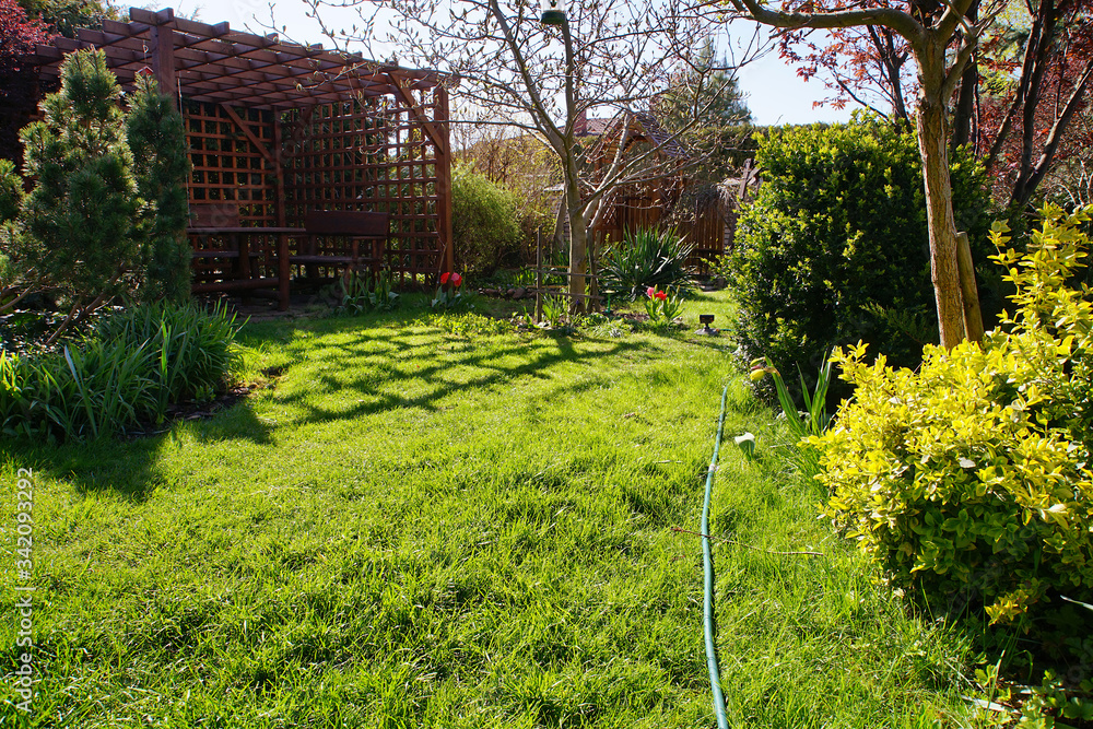 Fototapeta spring lawn in a suburban garden on a sunny day