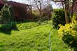 spring lawn in a suburban garden on a sunny day