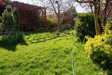 Spring Lawn In A Suburban Gard...