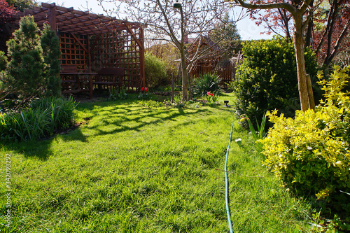 spring lawn in a suburban garden on a sunny day