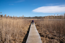 Woman Walking On Long Wooden B...