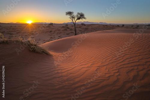 Sunset on the windswept red sand dune Fototapeta