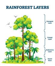 Rainforest Layers Vector Illustration. Jungle Structure Educational Scheme.