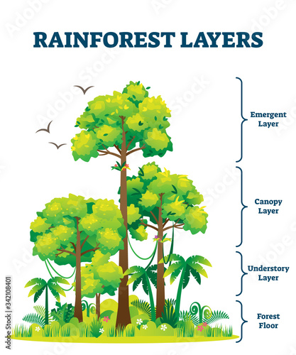 Rainforest layers vector illustration Wallpaper Mural