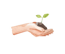 Female Hands Holding A Green Sprout. Garden Watercolor Illustration Isolated On White Background, Hand Drawn Clipart. Human Body Fragment.