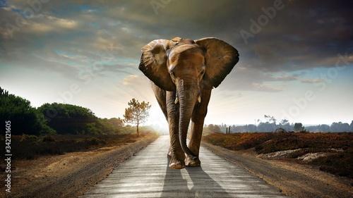 Fototapeta elephant walking on road obraz