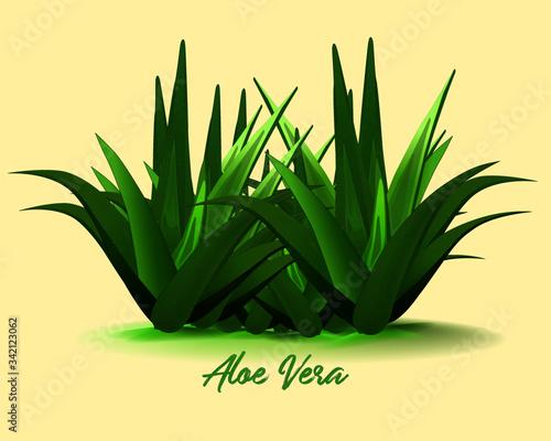 aloe vera plant Canvas Print