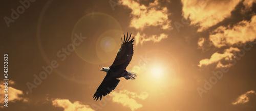 silhouette eagle flying against evening sunset sky with lens flare Fototapet