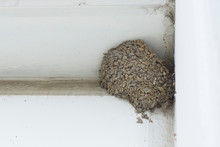 Abandoned Nest Of City Swallow...