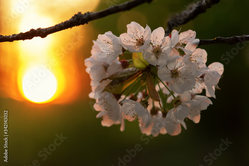 Photo Blossom fire