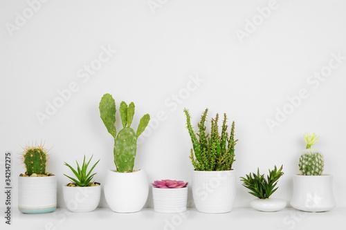 Fotografia Unique set of house plants on a shelf
