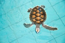 Close-up Of Tortoise In Water