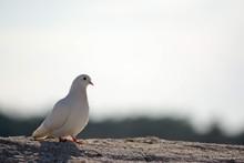 Bird Perching On Sand