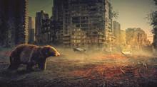 Bear And City Damage, Photo Ma...