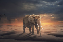 Elephants Are In The Desert