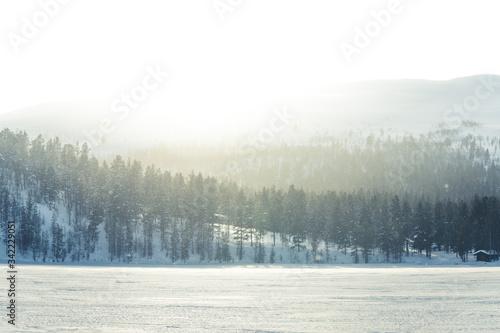Fotografie, Obraz Trees On Snow Covered Land Against Sky