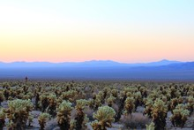 Scenic View Of Joshua Tree National Park Against Sky During Sunrise