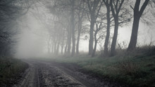 Dirt Road Amidst Trees In Foggy Weather