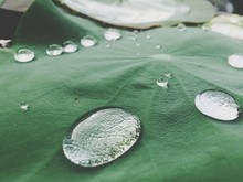 Close-up Of Water Drops On Lily Pad