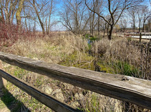Old Wooden Fence In Marsh