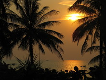 Silhouette Palm Trees Against ...