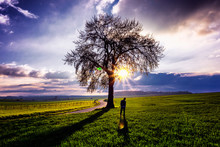 Silhouette Man Standing By Bare Tree On Field Against Cloudy Sky