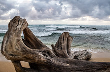 Driftwood On Beach In Hawaii