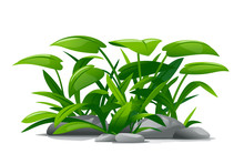 Plants With Green Leaves Grow Around Stones In Landscape Design, Detailed Jungle Plants On Ground Isolated Illustration, Decorative Plant Composition On Ground, Dense Vegetation Of The Jungle