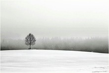 Single Tree On Snowy Hill