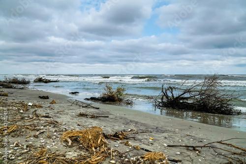 Trunks ashore Canvas Print