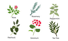 Set Of Different Natural Herbs...