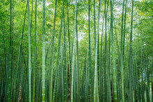 Sunshine And Green Bamboo Forest