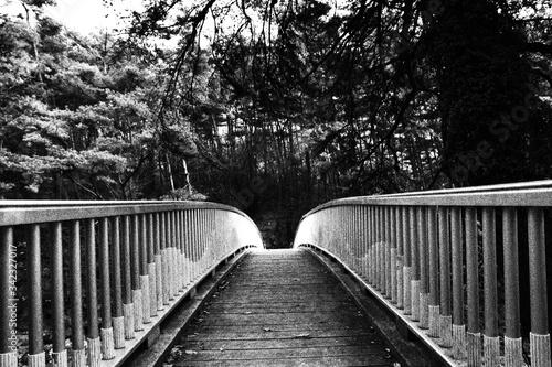 Canvas Print Narrow Footbridge Along Trees