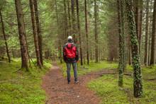 A Trekker Walking Solo  Among ...
