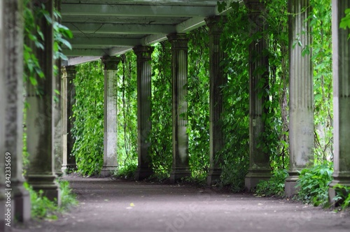 Fotografering Empty Colonnade Amidst Plants