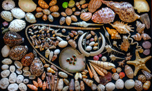 Arranged Marine Shell Collection