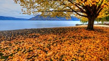 Fallen Leaves At Lakeshore During Autumn