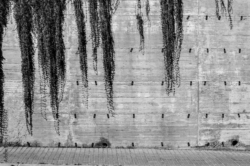 Fotomural Creepers On Wall By Sidewalk