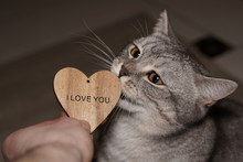 Cropped Image Of Person Giving Wooden Heart Shape To Cat