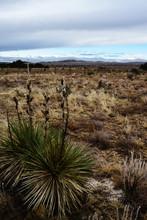 Desert Landscape, Yucca, Cacti...